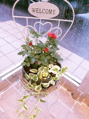 mini薔薇